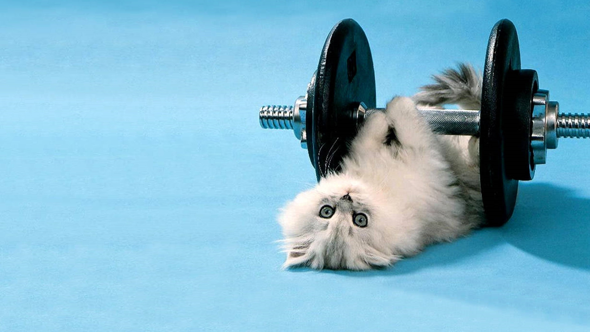 cat_dumbbells_funny_lie_52864_1920x1080